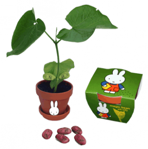 Nijntje_magische bonen_Miffy_and_the_magic_bean_flowerbulbs