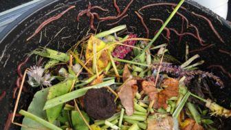 wormenbak vermicultuur mert wormen