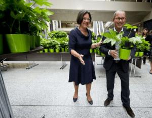 vingerplant als bureauplant van het jaar in tweede kamer