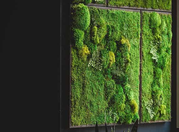 Onwijs Mos tegen de muur in de woonkamer | Tuin en Balkon WR-18