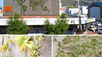 Verticale Tuin Woonkamer : Verticale tuin u2022 pagina 5 van 6 u2022 tuin en balkon