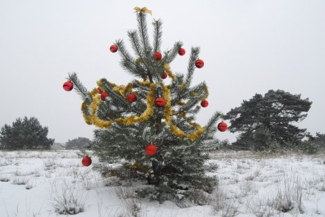 gratis kerstboom omzagen in park de hoge veluwe