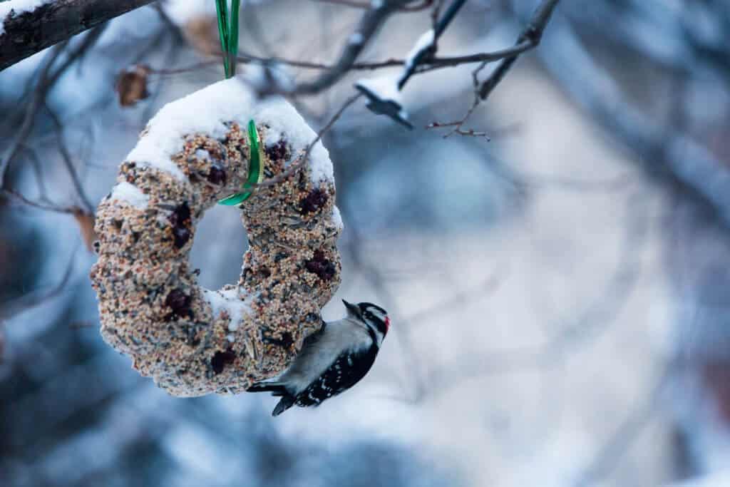 Beroemd Vetbollen maken voor je tuinvogels | Tuin en Balkon &HU93