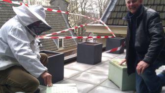 bijen op dak stadsschouwburg amsterdam