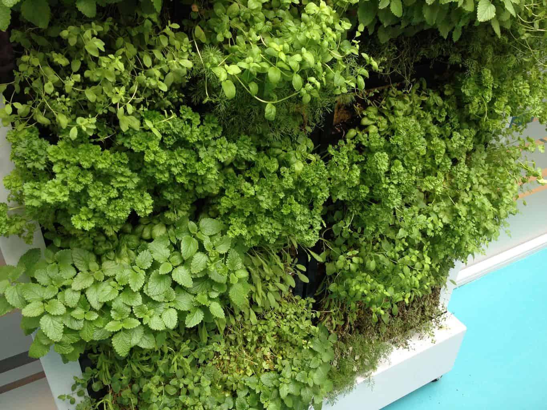 Voor informatie over verticale tuin ga naar online tuincentrum