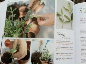 basiscursus groene vingers 2