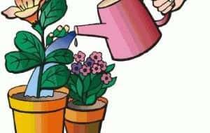 Automatische planten watergeven