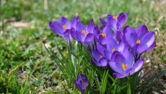 Praktische tuintips voor de maand maart