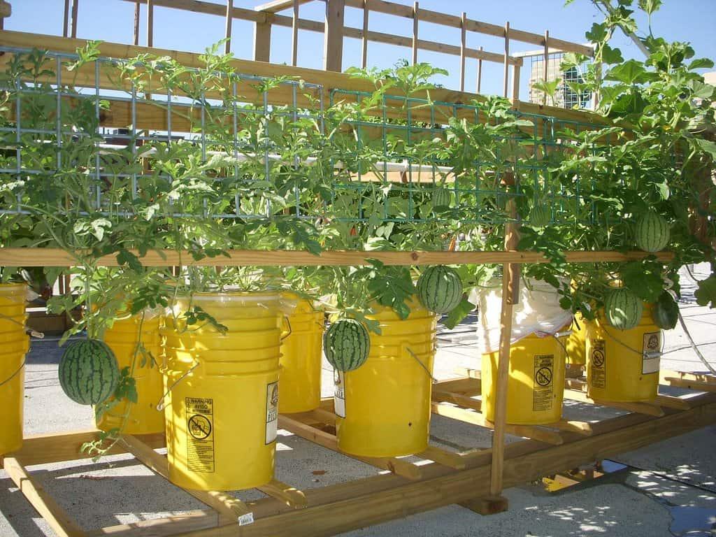 Groente verbouwen in een emmer tuin en balkon for Tuin verbouwen