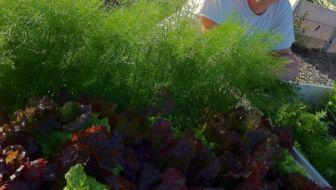 Matthias-tuinexpert-tuinadvies-tuinenbalkon