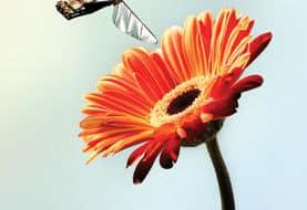 robotbij-met-bloem-SA