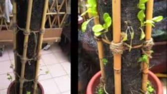 Verticale Tuin Maken : Verticaal u tuin en balkon