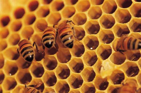 Planten Voor Bijen.De Beste Planten Voor Bijen