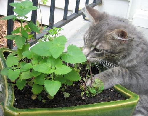 Kattenstront In Tuin : Kattenpoep verwijderen of niet? tuinvraag tuin en balkon