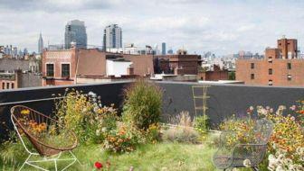 Honderd groene daken in centrum van Amsterdam