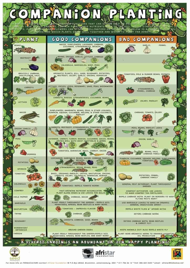 companion planting - planten die elkaar helpen