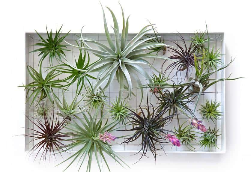 Manieren voor verticaal tuinieren tuin en balkon
