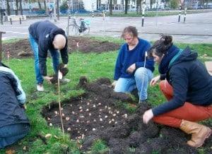 bloembollen-westplein-utrecht-bron-duic.nl