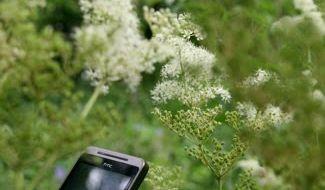Urban foraging, de trend voor 2014?