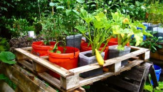 Pagina van de maand: Container Gardening Alliance