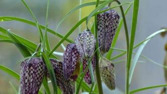 5 tips voor snelle bloei in de lente