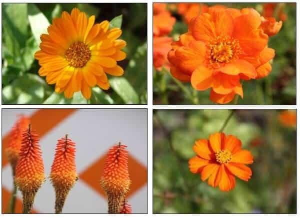 Natuurlijk ook wat stijlvolle bloemen, bijvoorbeeld goudsbloemen die ook handig zijn tegen muggen!