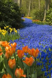 bloembollen geven een mooi effect
