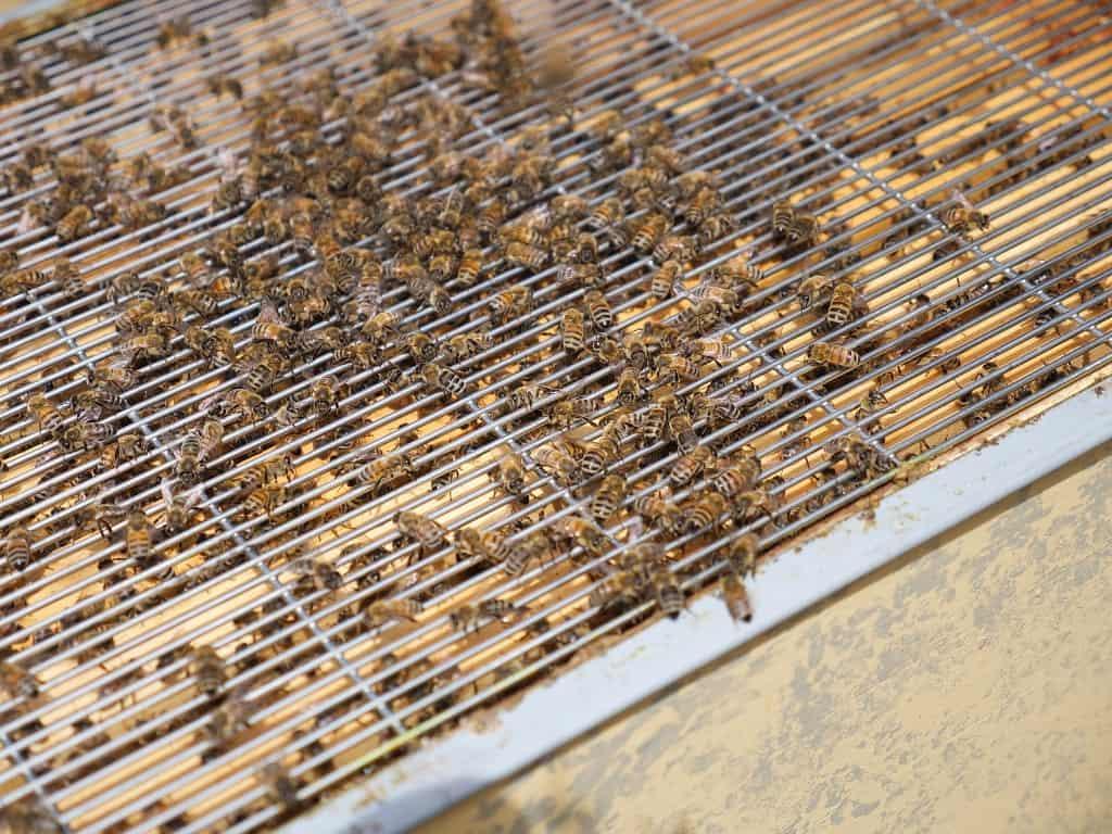 rekje tussen broedkast en honingkast bijen