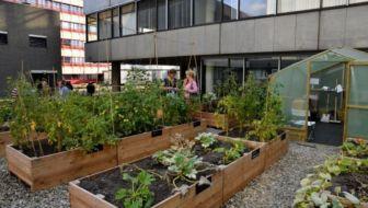 Elektra Aanleggen Tuin : Dakterras u pagina van u tuin en balkon