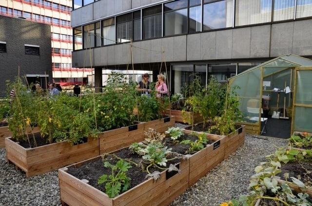 Tuinieren Op Balkon : De voordelen van verhoogde moestuinbakken tuin en balkon