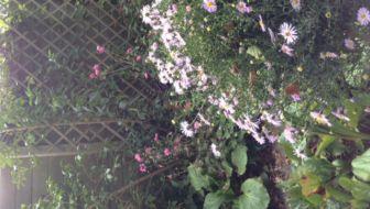 Evaluatie van het tuinseizoen