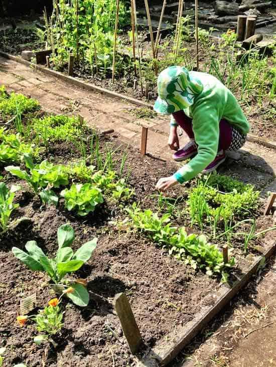 workshops tuinieren in de stad tuin en balkon