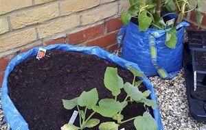 Tuinieren in blauwe IKEA draagtassen