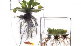 5x inspiratie voor waterrijk groen in je huiskamer
