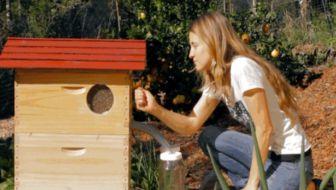 Direct honing uit tappen met de Flowhive bijenkorf