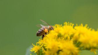 """boekbespreking: """"bijen houden voor iedereen"""""""