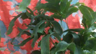 Make your plants POP! Wij doen mee met Urban Jungle Bloggers