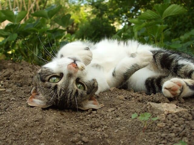 Kattenstront In Tuin : Succesvol katten uit je tuin verjagen afschrikken of weglokken