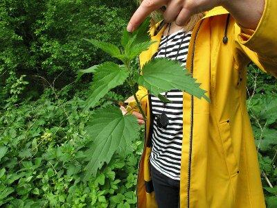 lynn_urban_herbology_walk
