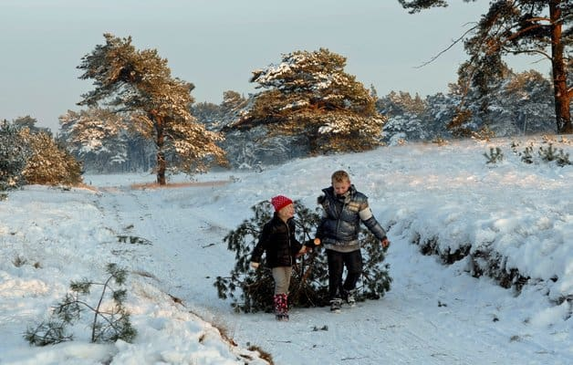 chte-kerstboom-zagen-in-np-de-hoge-veluwe_546