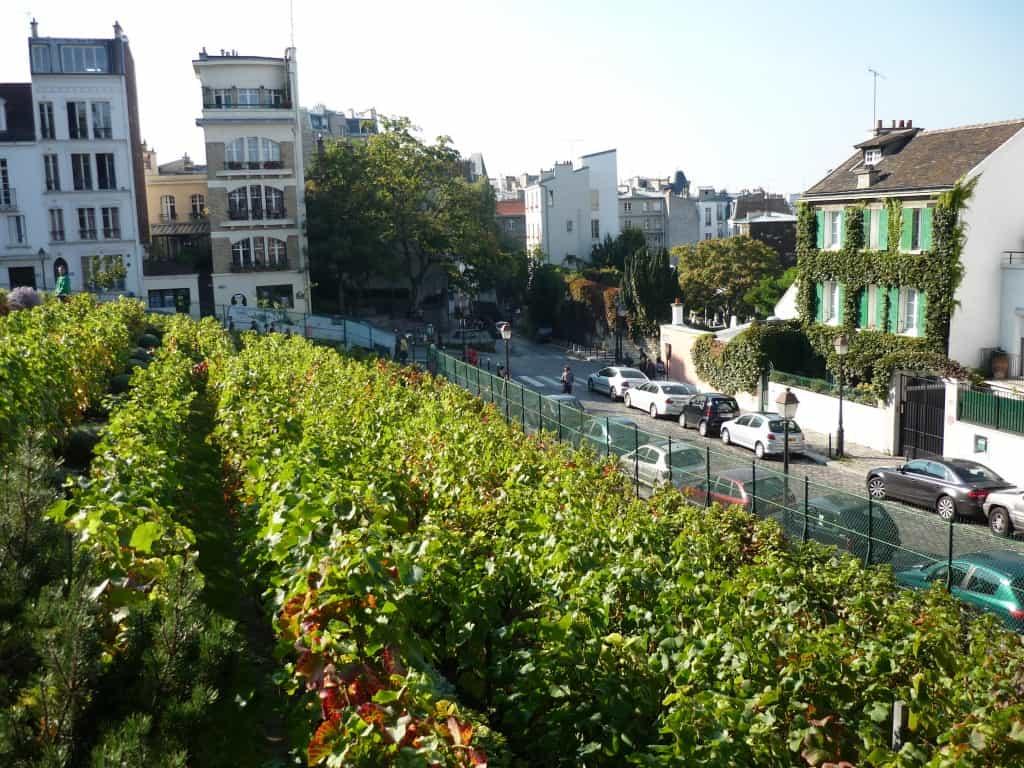 Wijn verbouwen in de stad hoe serieus is dat tuin en for Tuin verbouwen