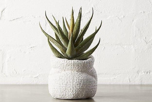 aloe vera heeft als bijnaam de onsterfelijke plant en kan ook makkelijk gestekt worden dus zelfs voor mensen zonder groene vingers is er geen excuus