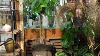 Botanische woontrend breekt door, haal die planten maar binnen
