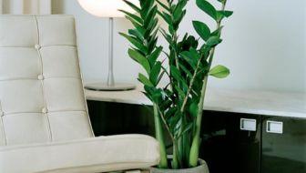 5 ideale kamerplanten voor in een donker huis
