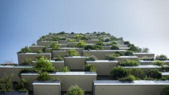 Tuinvraag: welke planten zijn goed voor op het balkon?