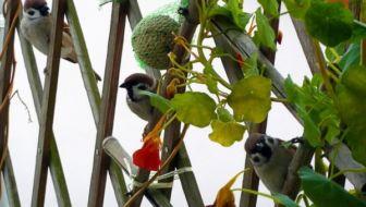 Tips voor meer vogels op je balkon