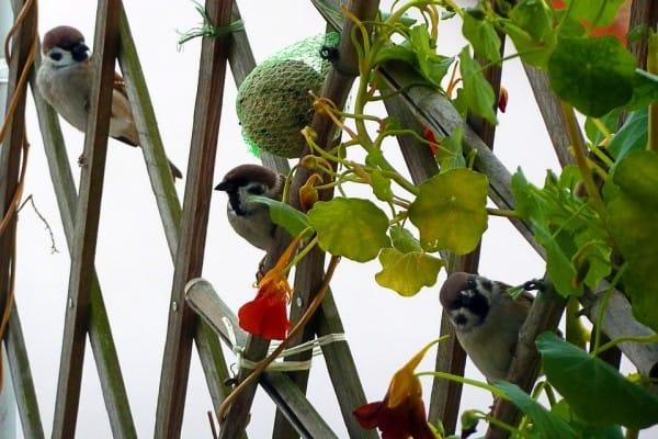 vogels op je balkon