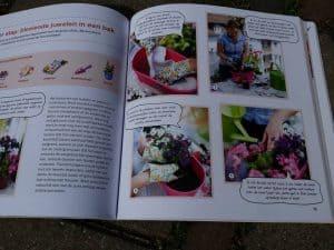 Stap voor stap: bloeiende planten in een pot