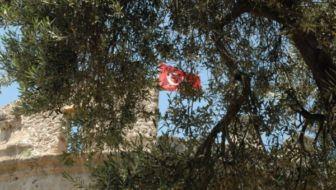 Het Turkse Antalya: inspiratie voor de stadstuinder