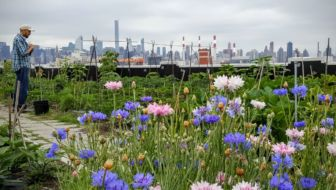 New York trip-tip: de Brooklyn Grange rooftop farm